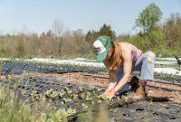 Definisi pertanian organik