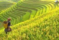 Masa suram pertanian